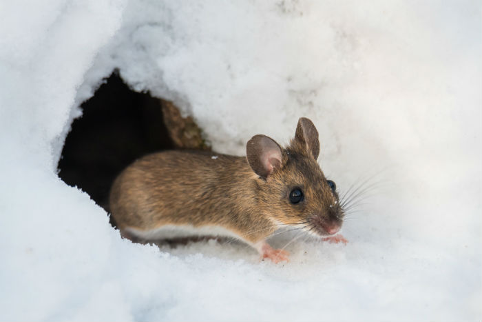 Why Winter Pest Control Applications are Essential