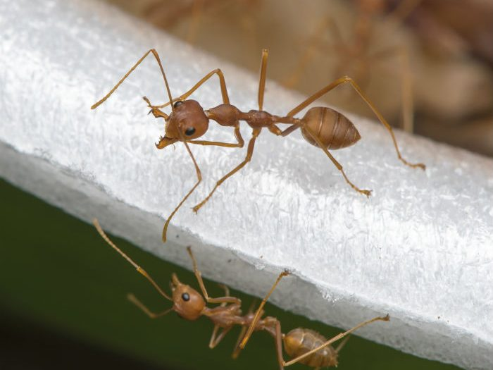 4 Ants to Watch For This Spring