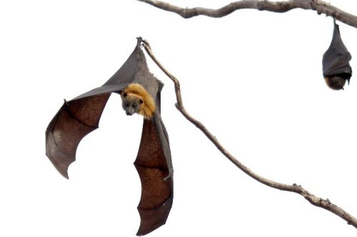 8 Amazing Facts About Bats
