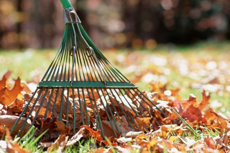 Fox's Fall Home & Yard Checklist