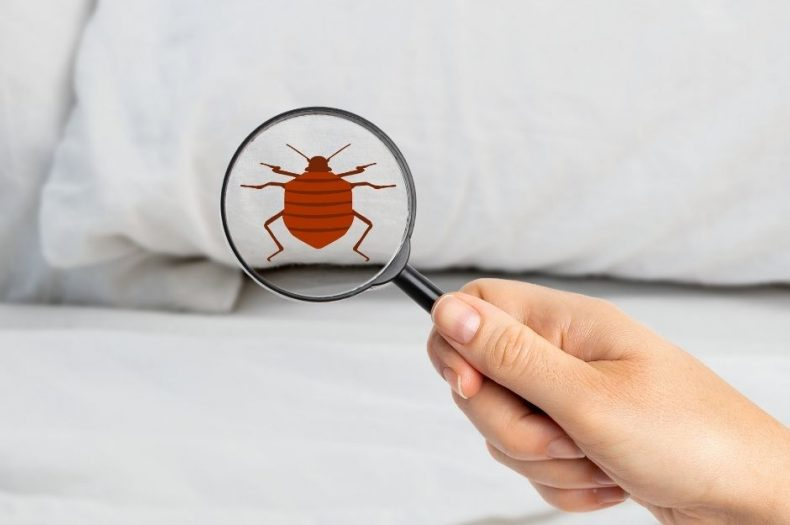 Where to Check for Bed Bugs: A Guide for the Holiday Traveler