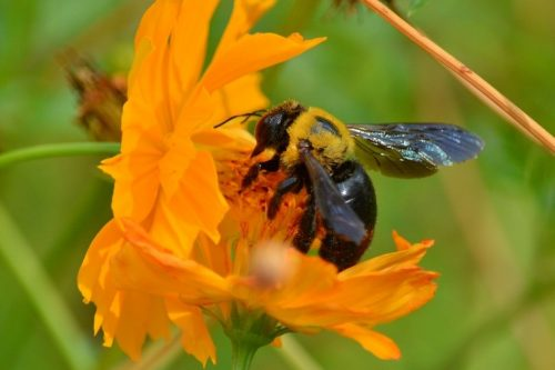 How To Prevent Carpenter Bee Damage