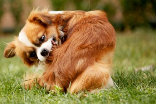 Best Pest Control Options for Pets
