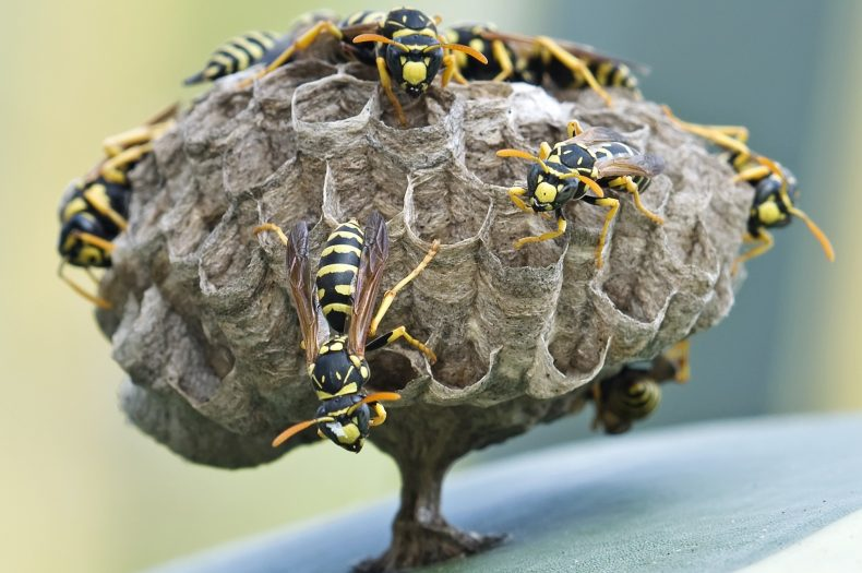 How to Keep Bees and Wasps Away From Your Pool