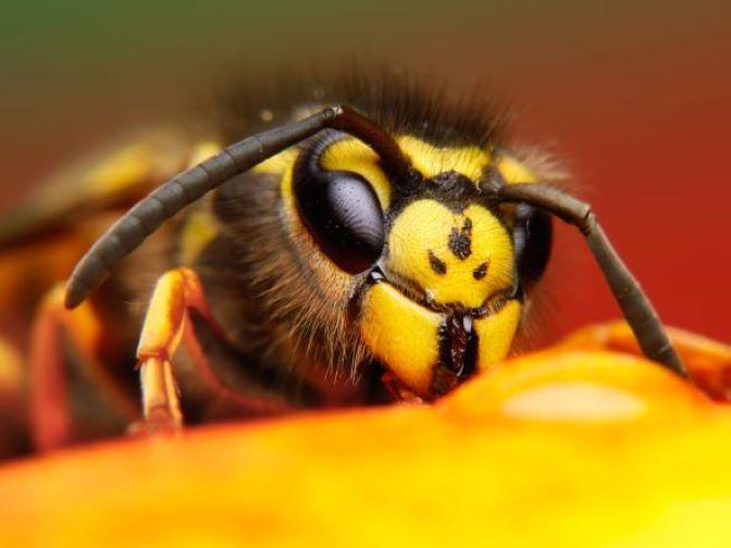 5 Fascinating Wasp Facts