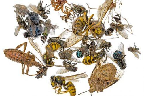 When to Hire Professional Pest Control VS. Do-It-Yourself Options